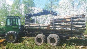nukirsto miško ištraukimas
